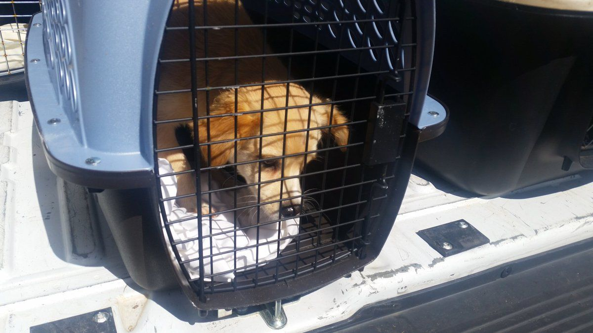 Homeless pets pulled from Irma's path arrive in area | WTOP