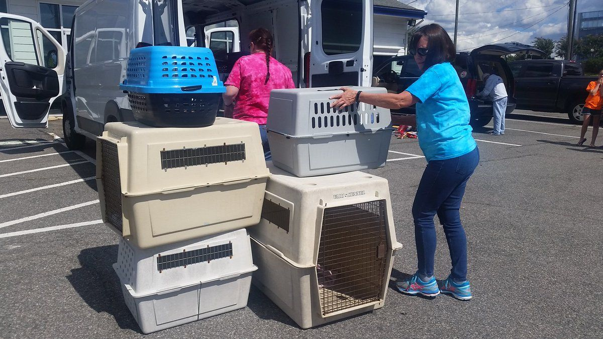 The animals that arrived on Saturday afternoon in Vienna came from Florence Area Humane Society in South Carolina. (WTOP/Kathy Stewart)