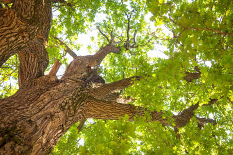 What to ask before getting estimates for tree care