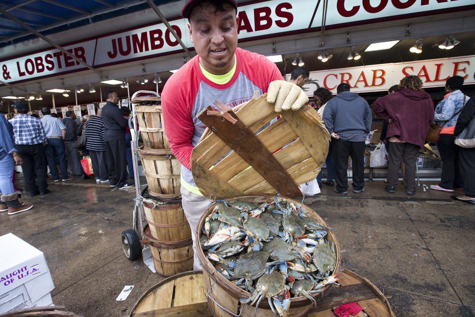 Bings Godoy puts a lid on a basket of crabs at Captain White's Seafood City at the Maine Avenue Fish Market in Washington, Thursday, Dec. 24, 2015, as unseasonably warm temperatures rise into the 70's on Christmas Eve. The open-air market was filled with customers picking out crabs, oysters, shrimp and fish for a traditional Christmas Eve meal.    (AP Photo/J. Scott Applewhite)