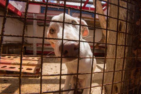 Humane Society evacuates dogs, cats to Maryland (Video)