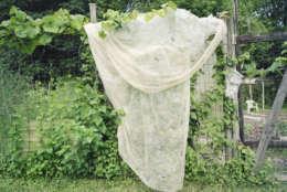 4. Garden Cloth, Greenbelt, Maryland (Photo Credit: Jason Reblando)