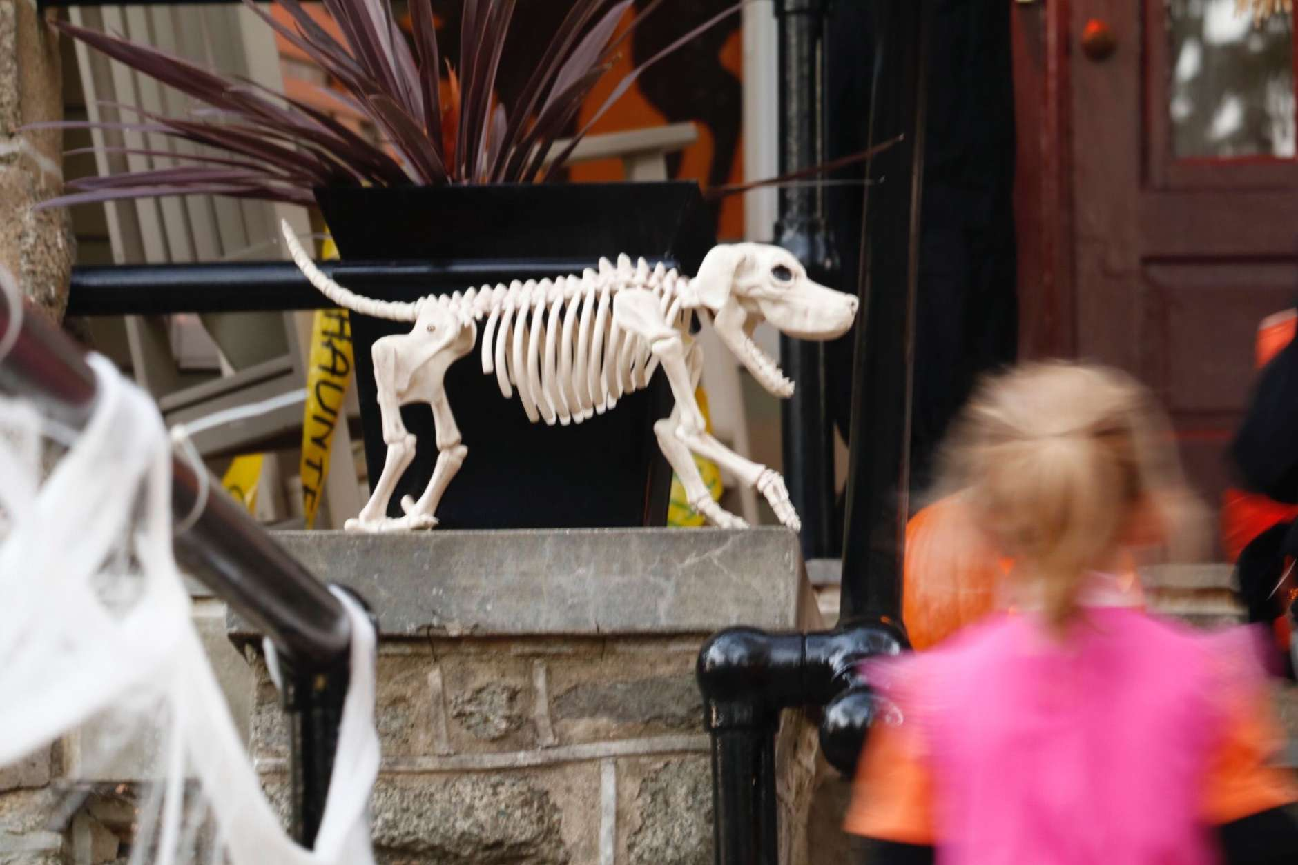 Skeletal decorations await candy-hungry kids in Northwest D.C. (WTOP/Kate Ryan)