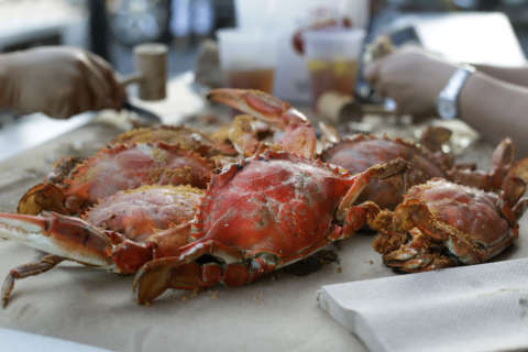 Harsh winter may indicate slow start to Md. crab season