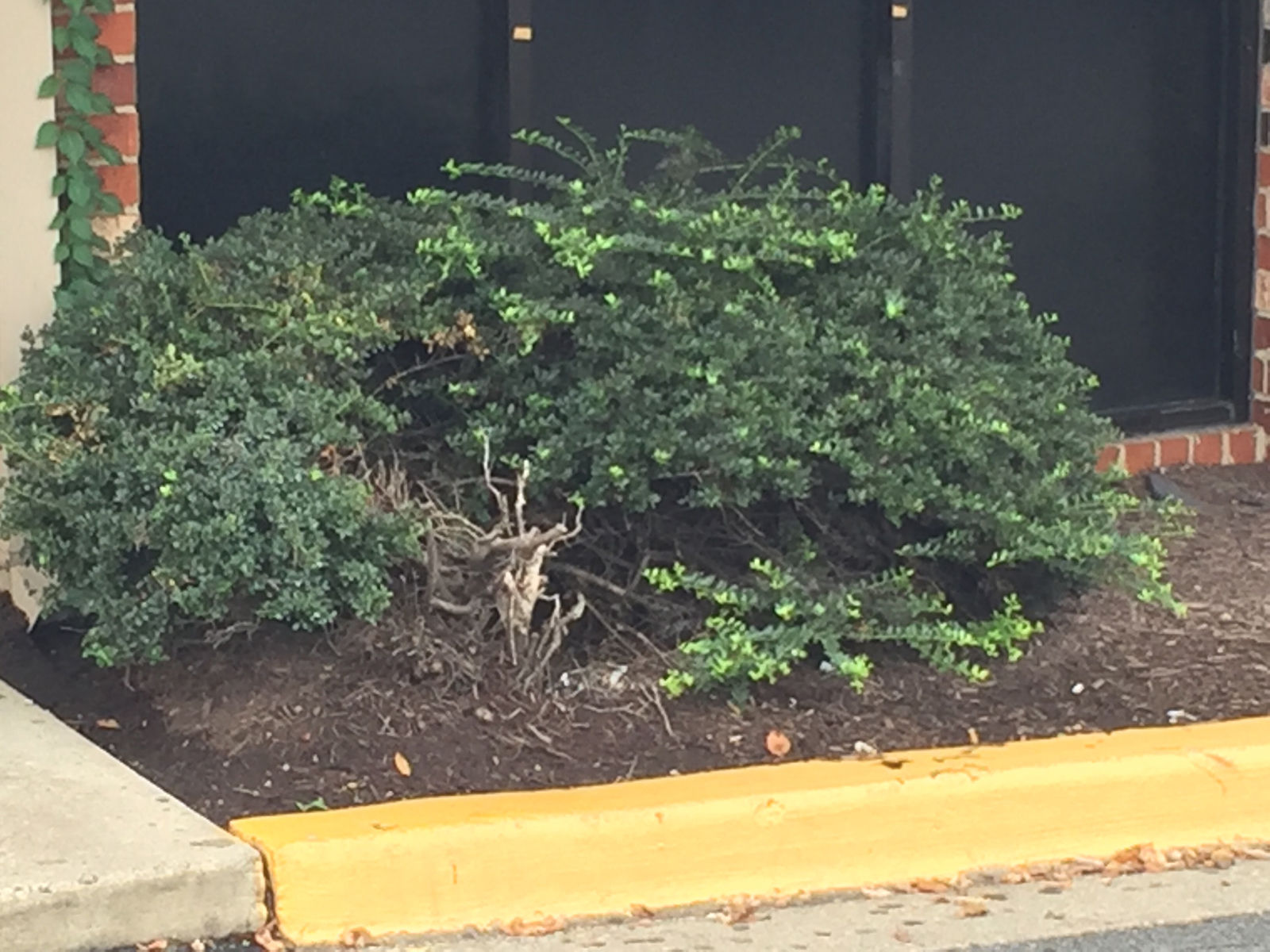 A closer look at where the bee hive was believe to have been located. (WTOP/Dave Foley)