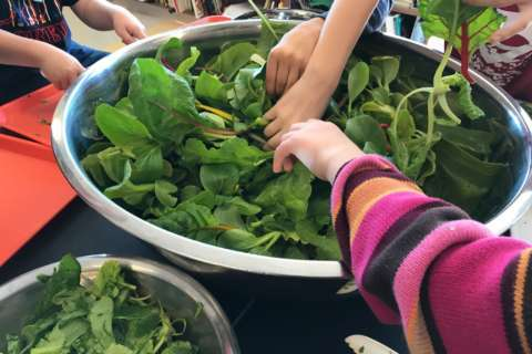 Student-grown salad in the school cafeteria? These kids dig it
