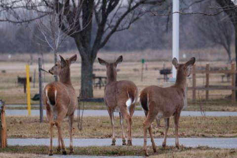 Deer hunting season begins in Montgomery County