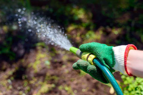 Reminders for your garden as cool weather rolls in