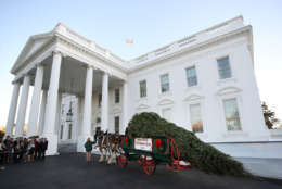 WASHINGTON, DC - NOVEMBER 20:  First lady Melania Trump and her son Barron welcomed a 19.5-foot balsam Fir that will serve as the official White House Christmas Tree at the White House on November 20, 2017. The tree is a Wisconsin grown Fir provided by the Chapman family of Silent Night Evergreens.  (Photo by Mark Wilson/Getty Images)