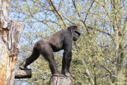 (Photo Credit: Ann Batdorf, Smithsonian's National Zoo)