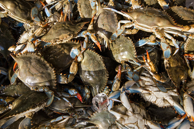 Live blue crabs are displayed for sale at the Maine Avenue Fish Market in Washington, Wednesday, June 1, 2016. Blue crabs, which thrive in the nearby Chesapeake Bay, are a summertime seafood favorite in the mid-Atlantic region. (AP Photo/J. Scott Applewhite)