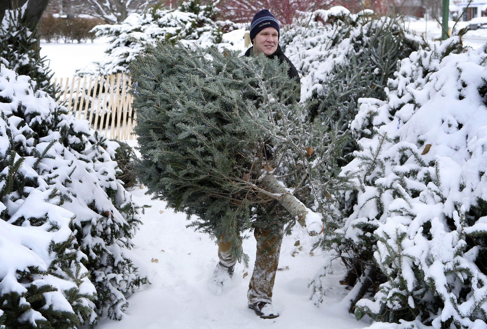 John White carries a Maine-grown Christmas tree at a Rotary Club tree lot Tuesday, Dec. 4, 2007, in South Portland, Maine.  The price of Christmas trees are going up this year, due to a post-great recession shortage of trees. (AP Photo/Robert F. Bukaty)
