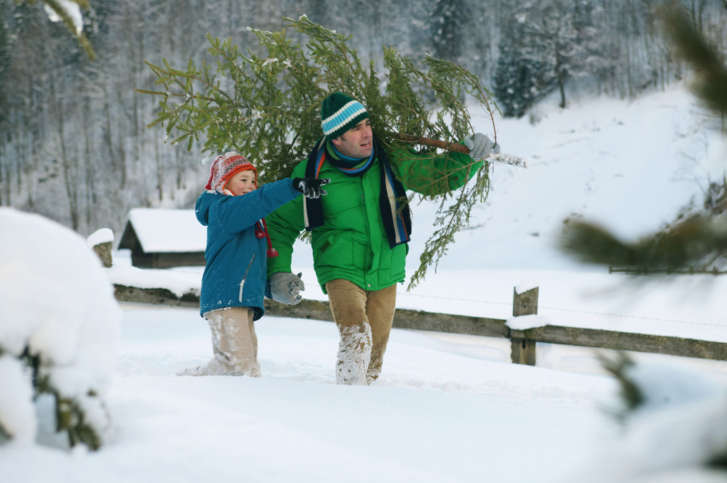 Tips for getting your Christmas tree home safely