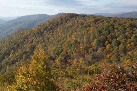 Expert: Expect less colorful foliage in southwest Virginia