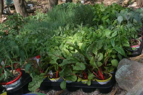 No garden variety gift ideas here: What to get someone with a green thumb