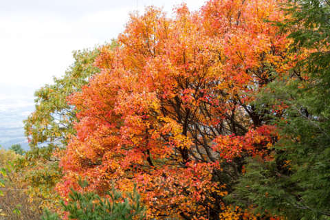 There's still time to enjoy fall foliage — but not much