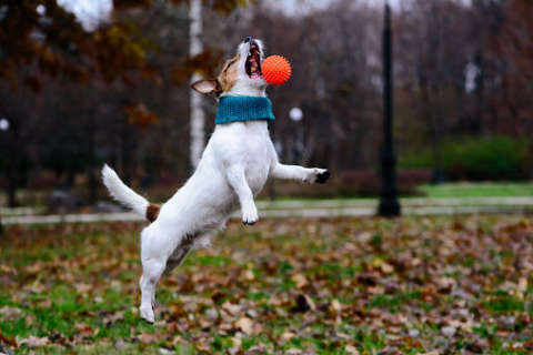 Cold weather activities to keep your pet healthy