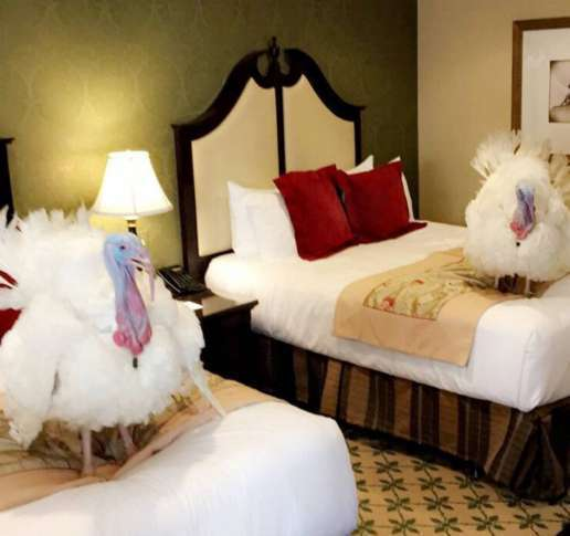 Turkeys stay at Washington, DC hotel ahead of Presidential pardon