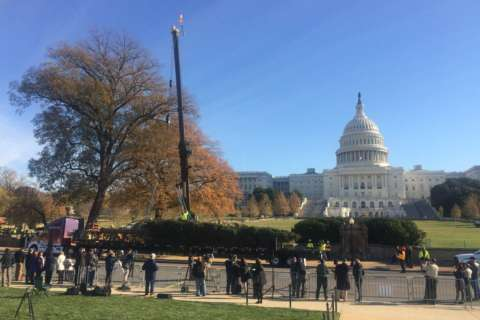 Photos: US Capitol Christmas tree arrives in DC