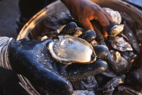 Oysters are big business for Virginia agriculture