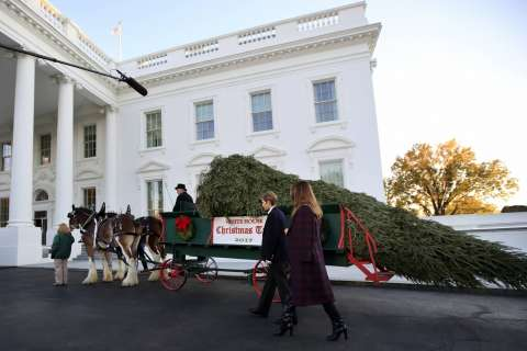 WATCH: White House Christmas tree delivery