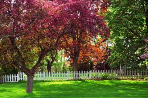 Lawn care tips to remember for colder weather