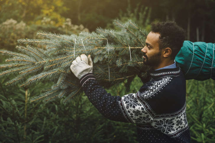 Keeping Your Christmas Tree All Year Round And Last Minute