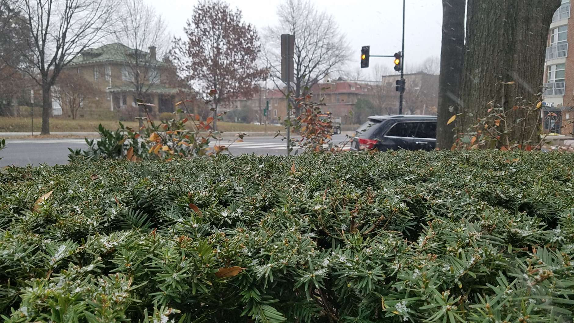 Snow collects on bushes outside the WTOP newsroom. (WTOP/William Vitka)