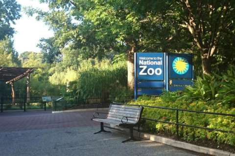 National Zoo to decrease entry points for visitors, add more fences