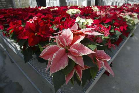 Garden Plot: Taking care of your seasonal plants long after the holiday season