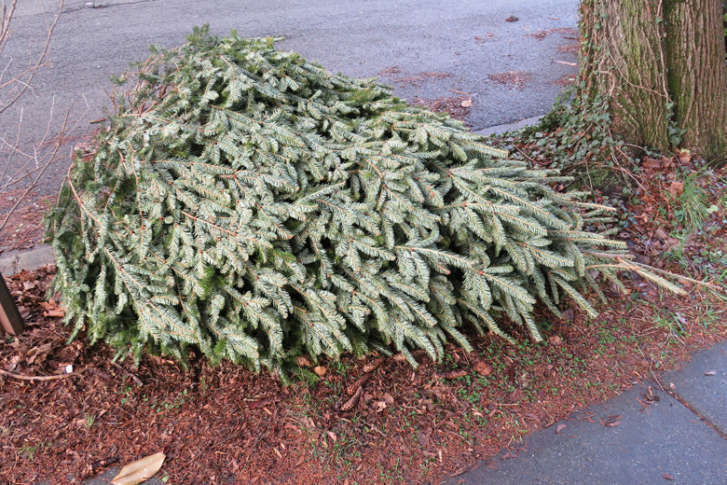 How to recycle your Christmas tree | WTOP