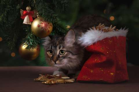 How to avoid pet hazards this holiday season