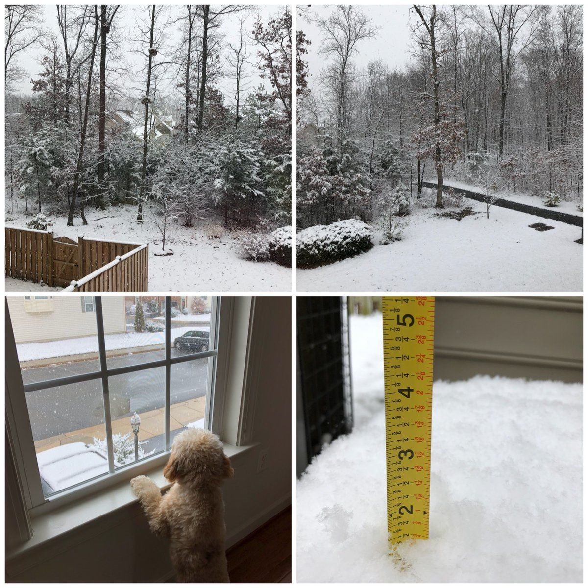 Twitter user @sarahm_Nova said the snow was still coming down at around 2 p.m. in Loudoun County, Virginia. (Courtesy Twitter/@sarahm_NoVa)