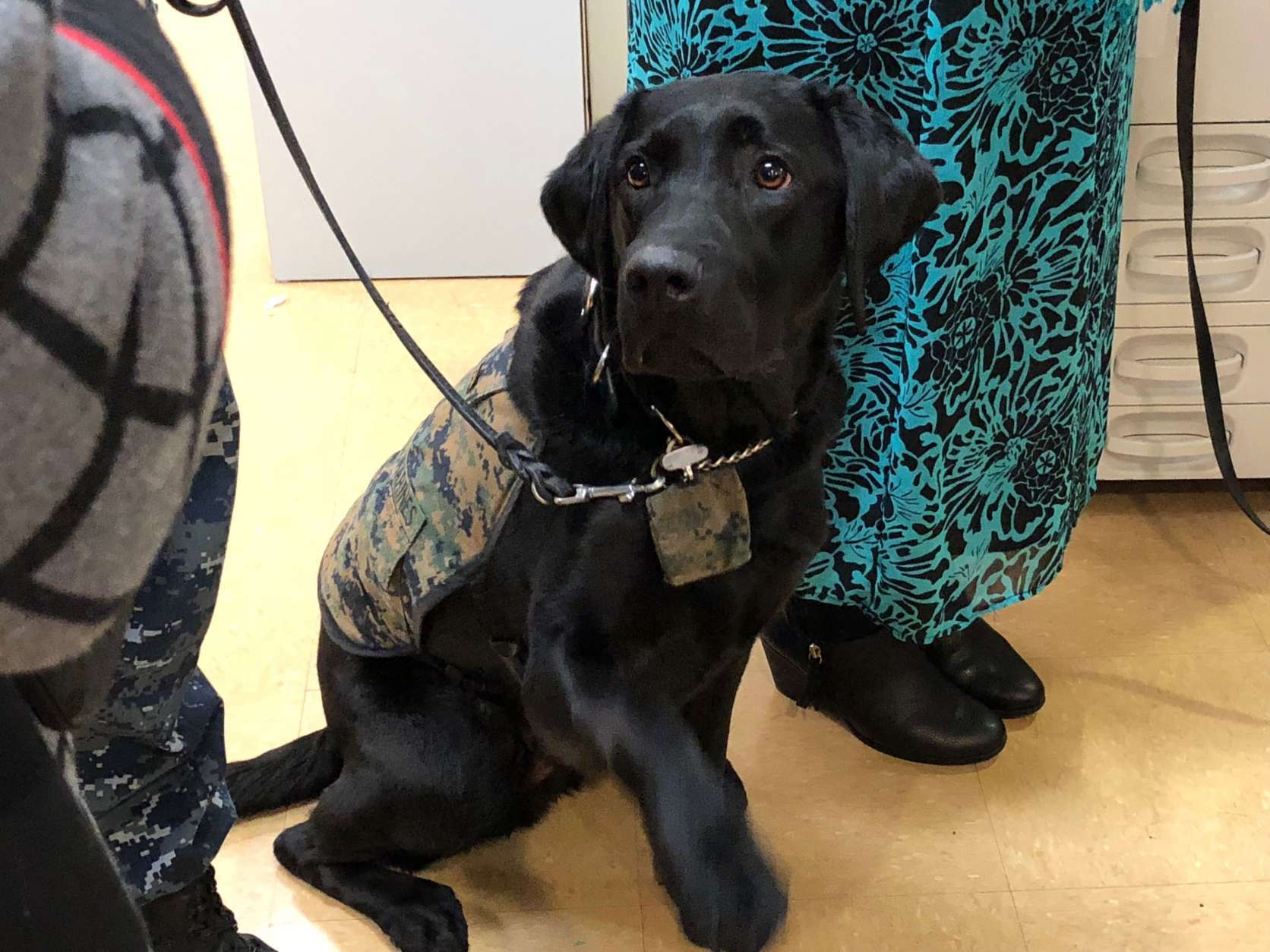 Walter Reed National Military Medical Center facility dog Dillon is ready to raise his paw in salute. (WTOP/Kate Ryan)