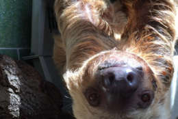 Hangin' with Ms. Chips in happier days. (Courtesy Kara Ingraham/Smithsonian's National Zoo)