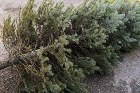 Tips for taking down and recycling your old Christmas tree
