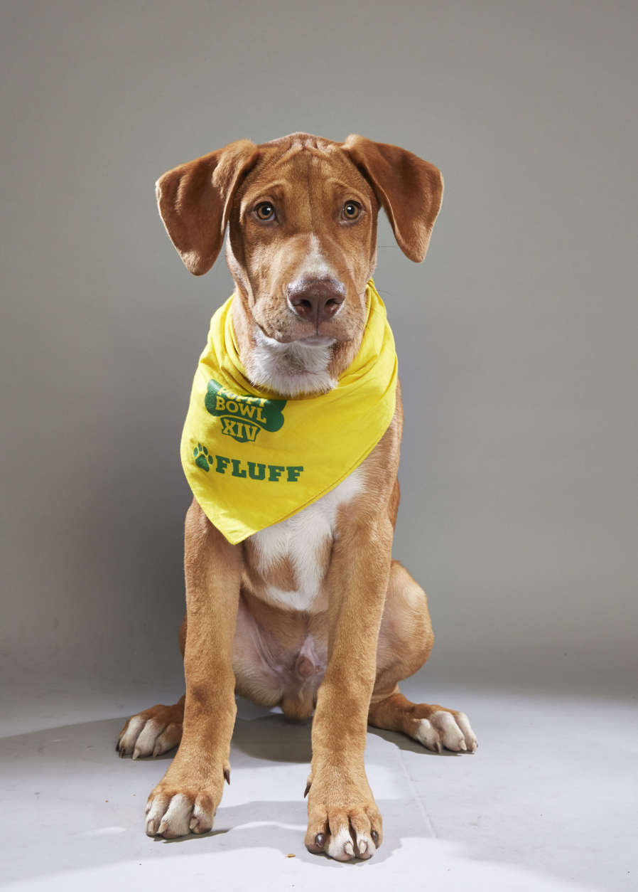 Alvin from Operation Paws for Homes in Virginia. (Courtesy Animal Planet)