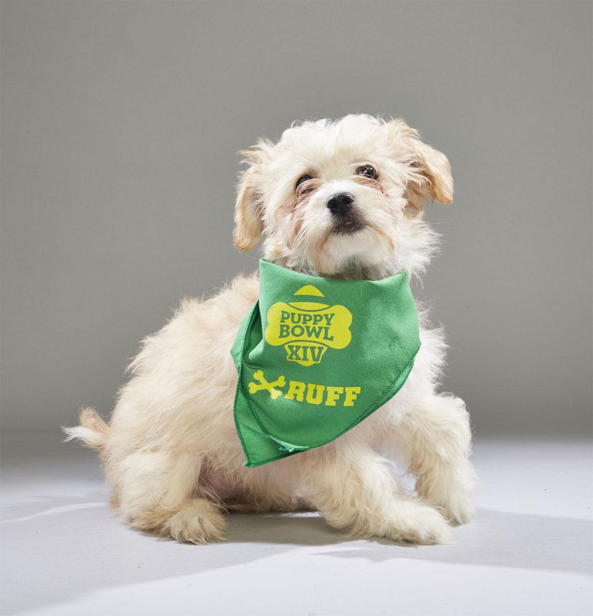 Jennifer Pawrence from Badass Brooklyn Animal Rescue. (Courtesy Animal Planet)