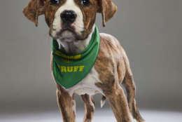 Hannah from Villalobos Animal Rescue. (Courtesy Animal Planet)