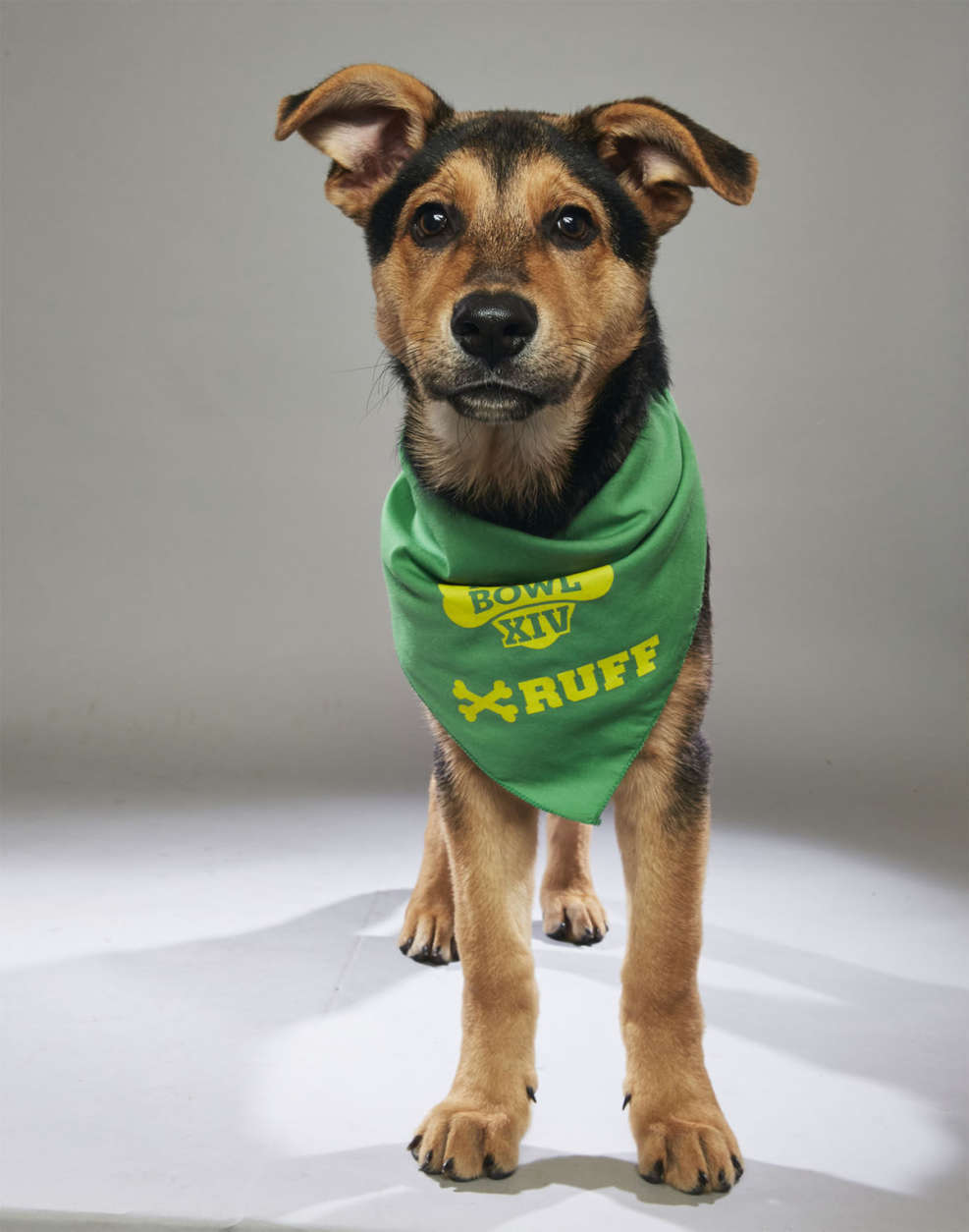 Edwin from the Humane Society of Greater Nashua (Courtesy Animal Planet)