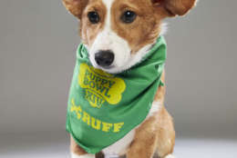 Clyde from Florida Little Dogs Rescue. (Courtesy Animal Planet)