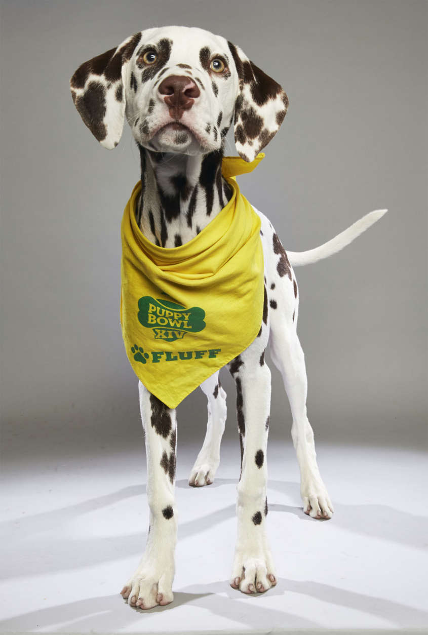 Chance from Green Dogs Unleashed. (Courtesy Animal Planet)