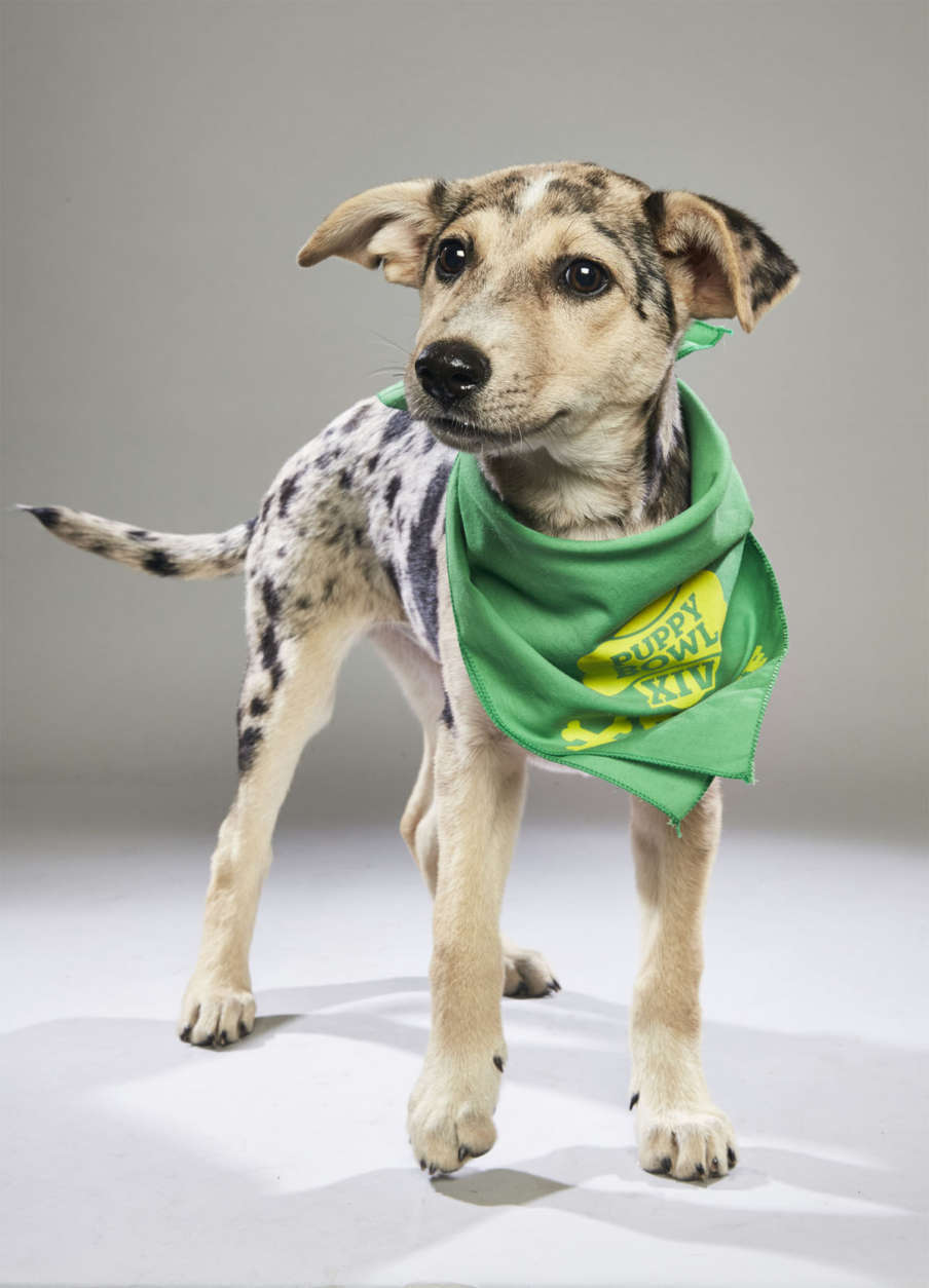 Ana from the Sebastian County Humane Services in Arkansas. (Courtesy Animal Planet)