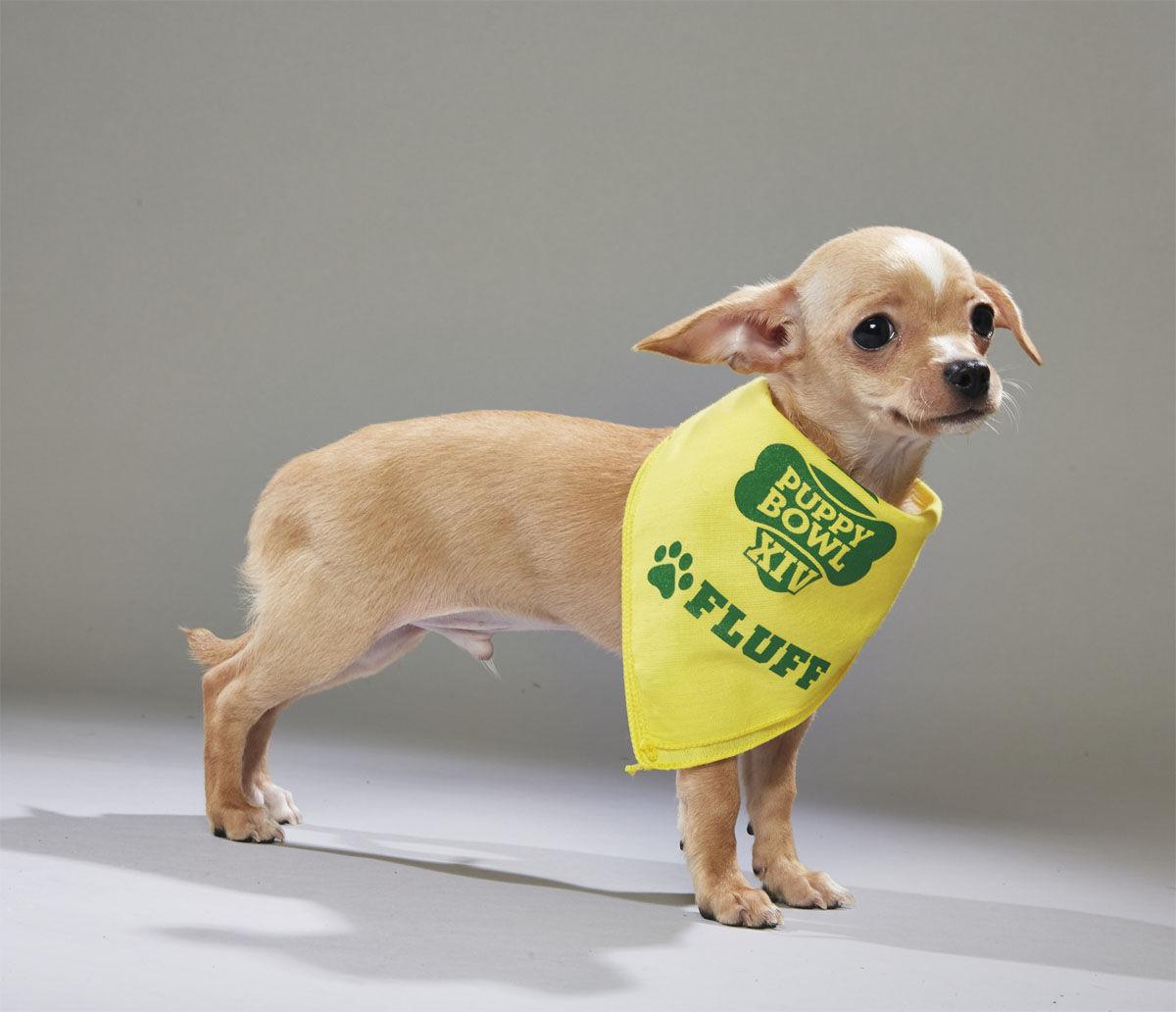 Buckalew from AHeinz57 Pet Rescue. (Courtesy Animal Planet)