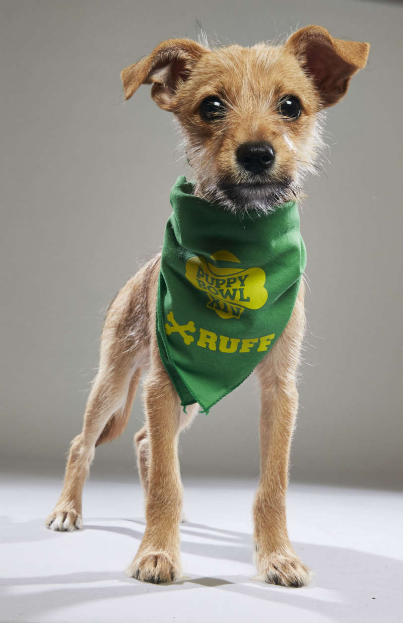 Boomer from Animal Friends Humane Society. (Courtesy Animal Planet)