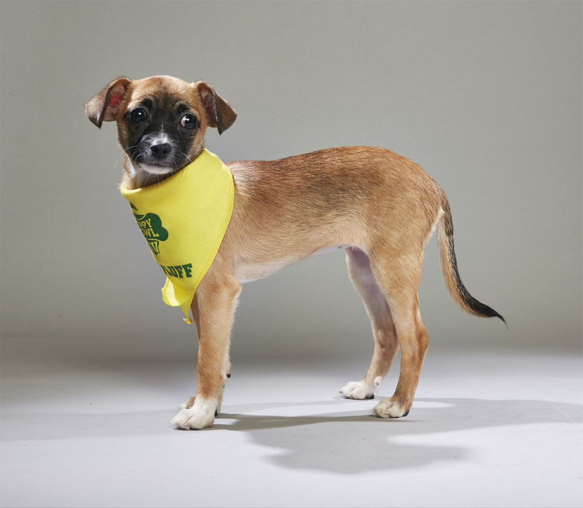 Biscuit from Social Tees. (Courtesy Animal Planet)