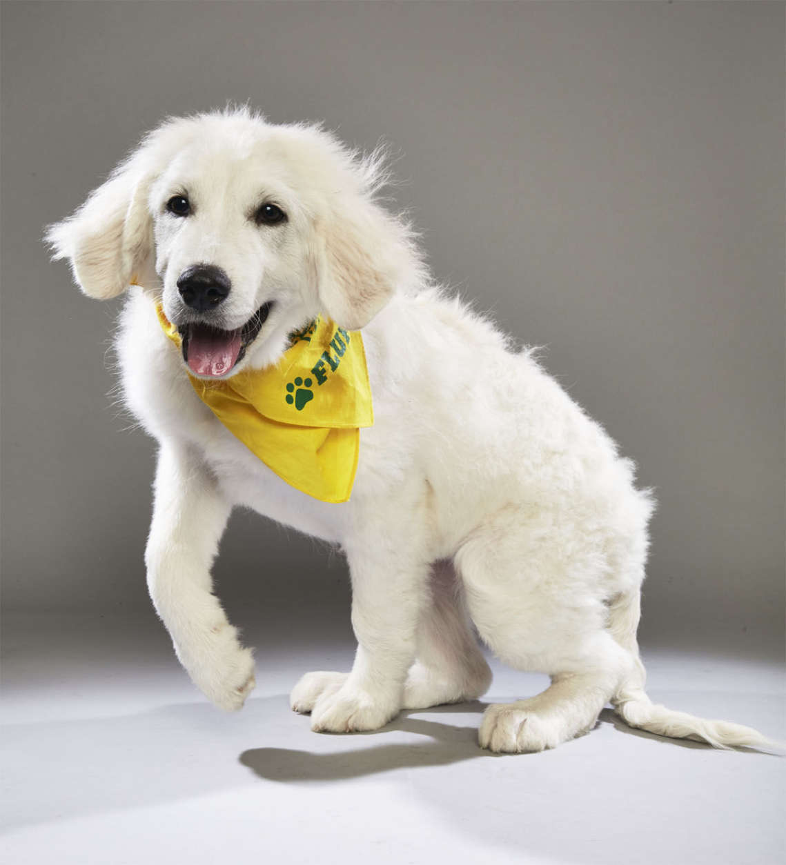 Olympia from Big Fluffy Dog Rescue. (Courtesy Animal Planet)