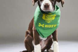 Peanut from AHeinz57 Pet Rescue. (Courtesy Animal Planet)