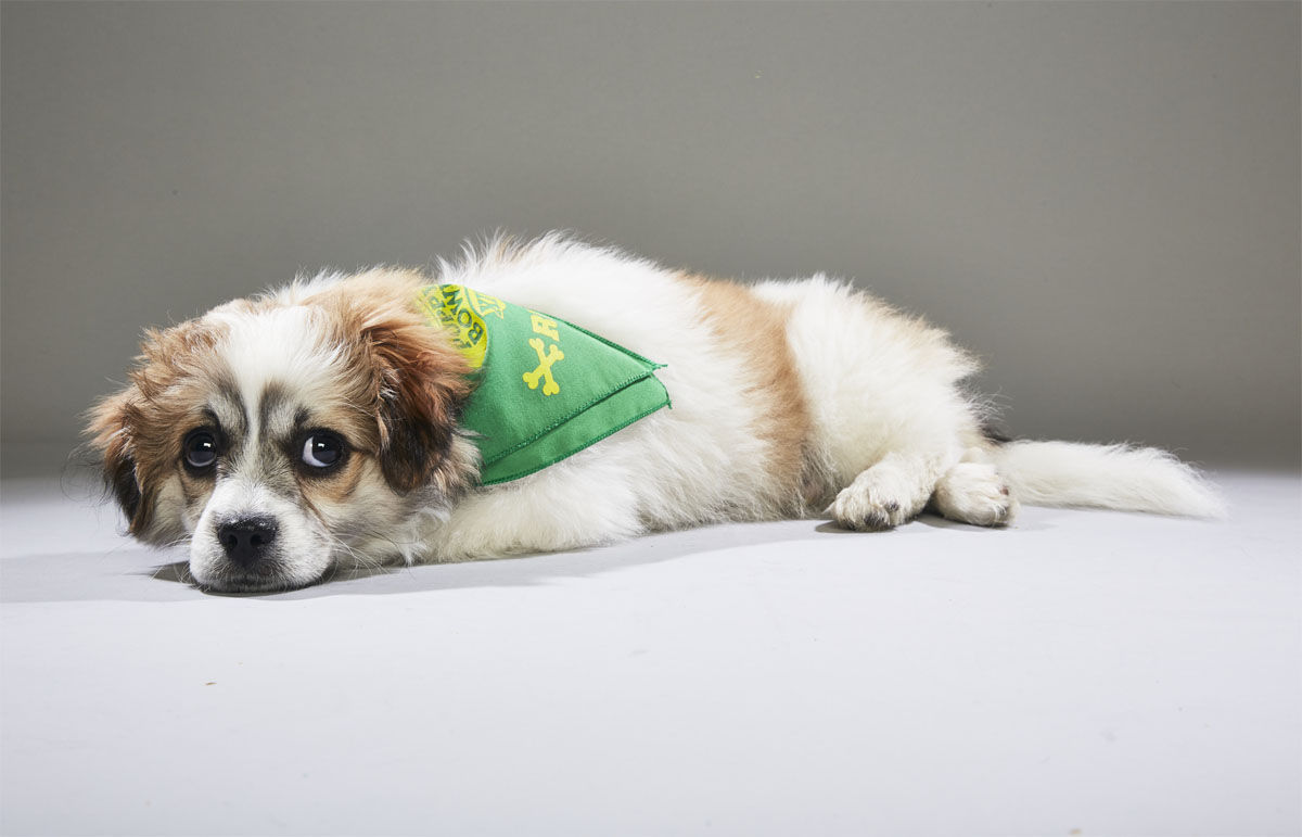 Petree from the Center for Animal Health and Welfare. (Courtesy Animal Planet)