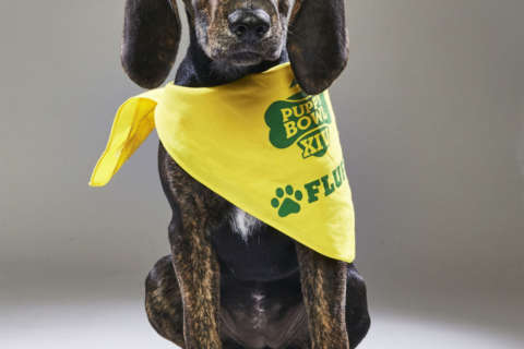 DC dog plays for Team Fluff in Puppy Bowl